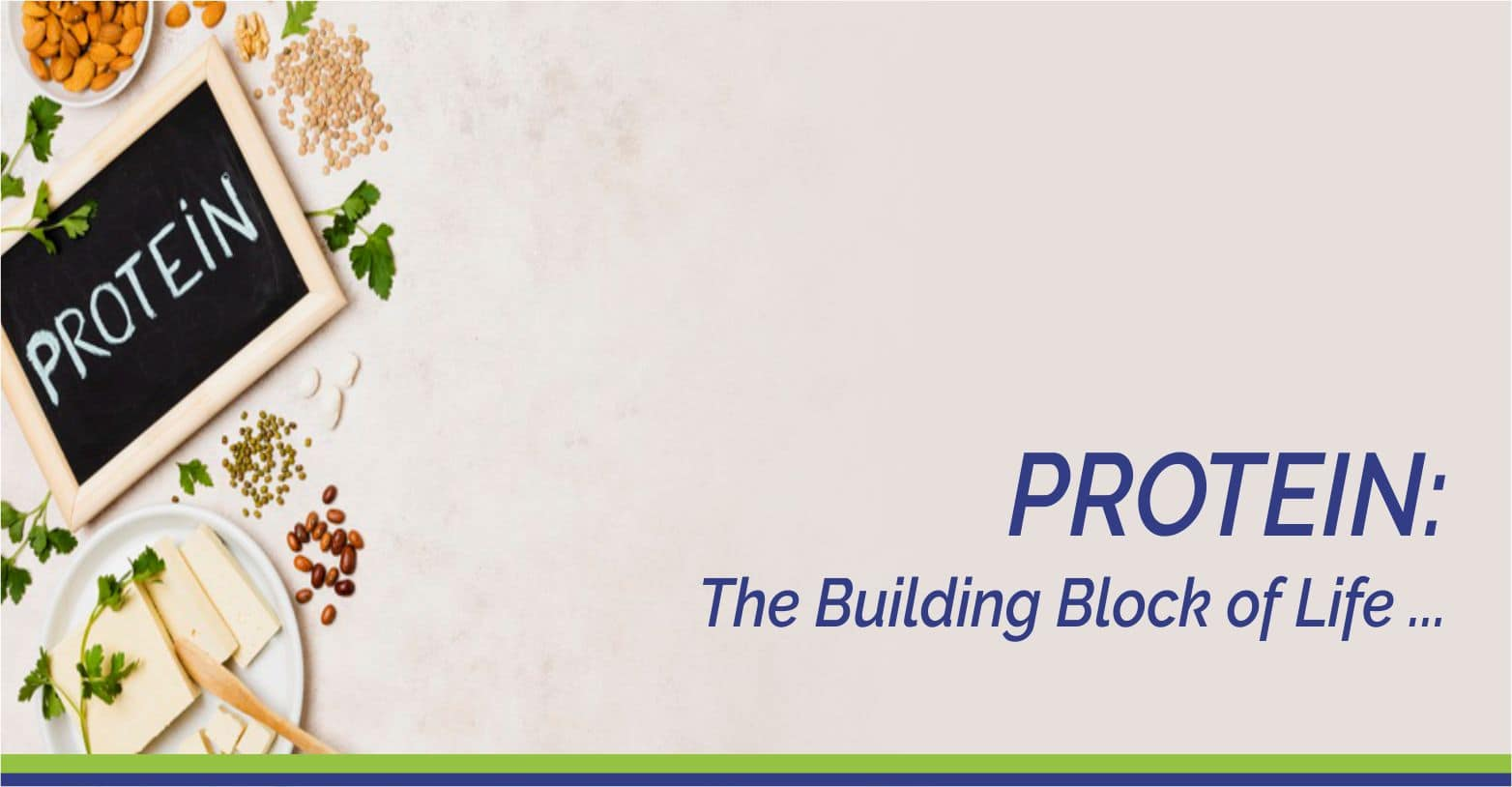 Protein: The Building Block of Life
